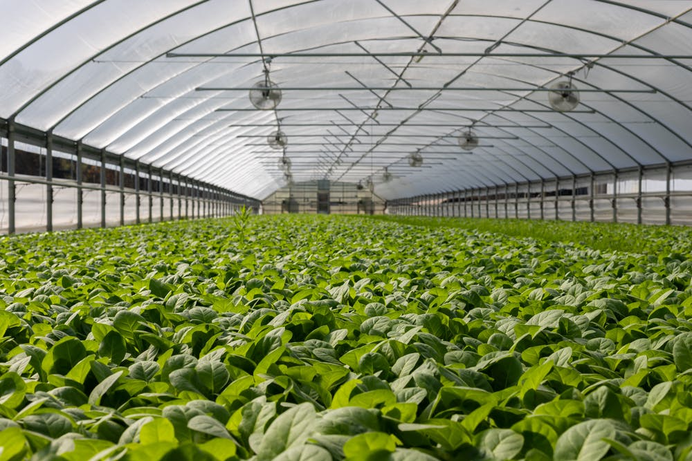 How to start a vegetable farm