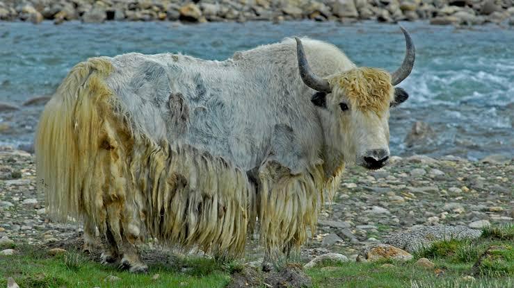 List of farm animals