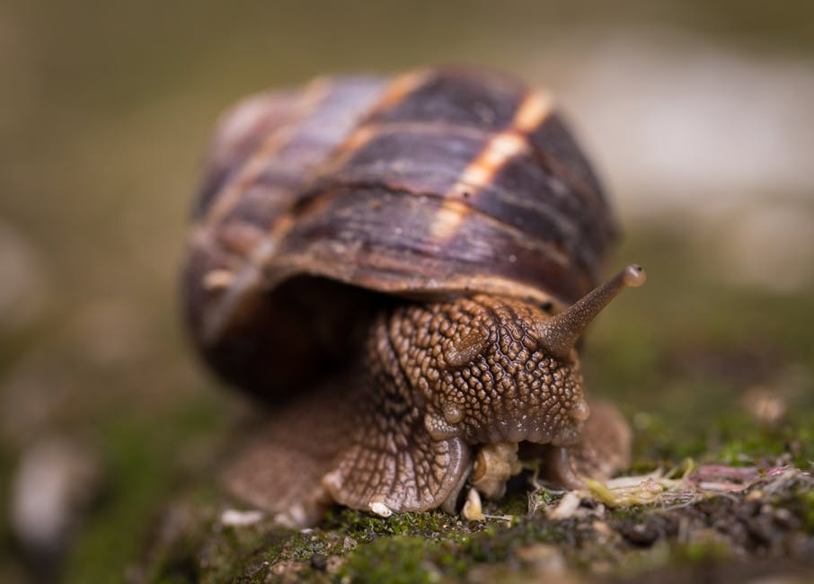 How to start snail farming in Nigeria
