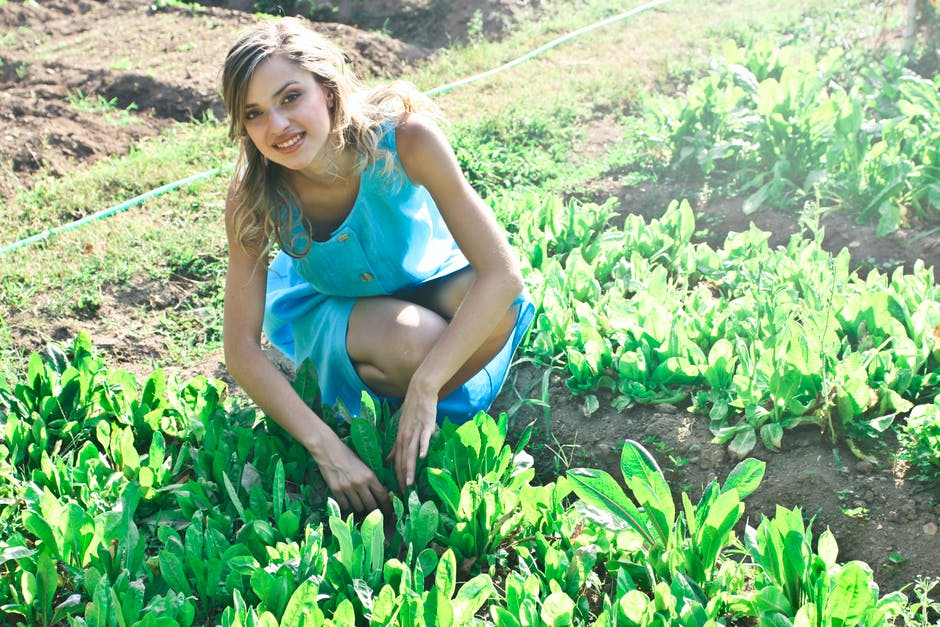 Youth Involvement in agriculture